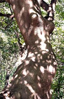 albero-profilo-donna